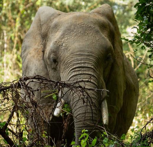 Elephantybg